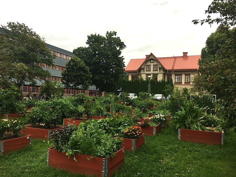 grönskande odlingslådor och pallkragar i rader