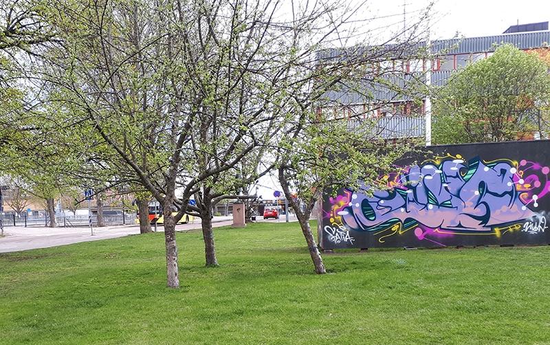 grönskande träd och grafittivägg i länsmuseets trädgår