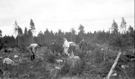 svartvit bild av barn som arbetare i skog