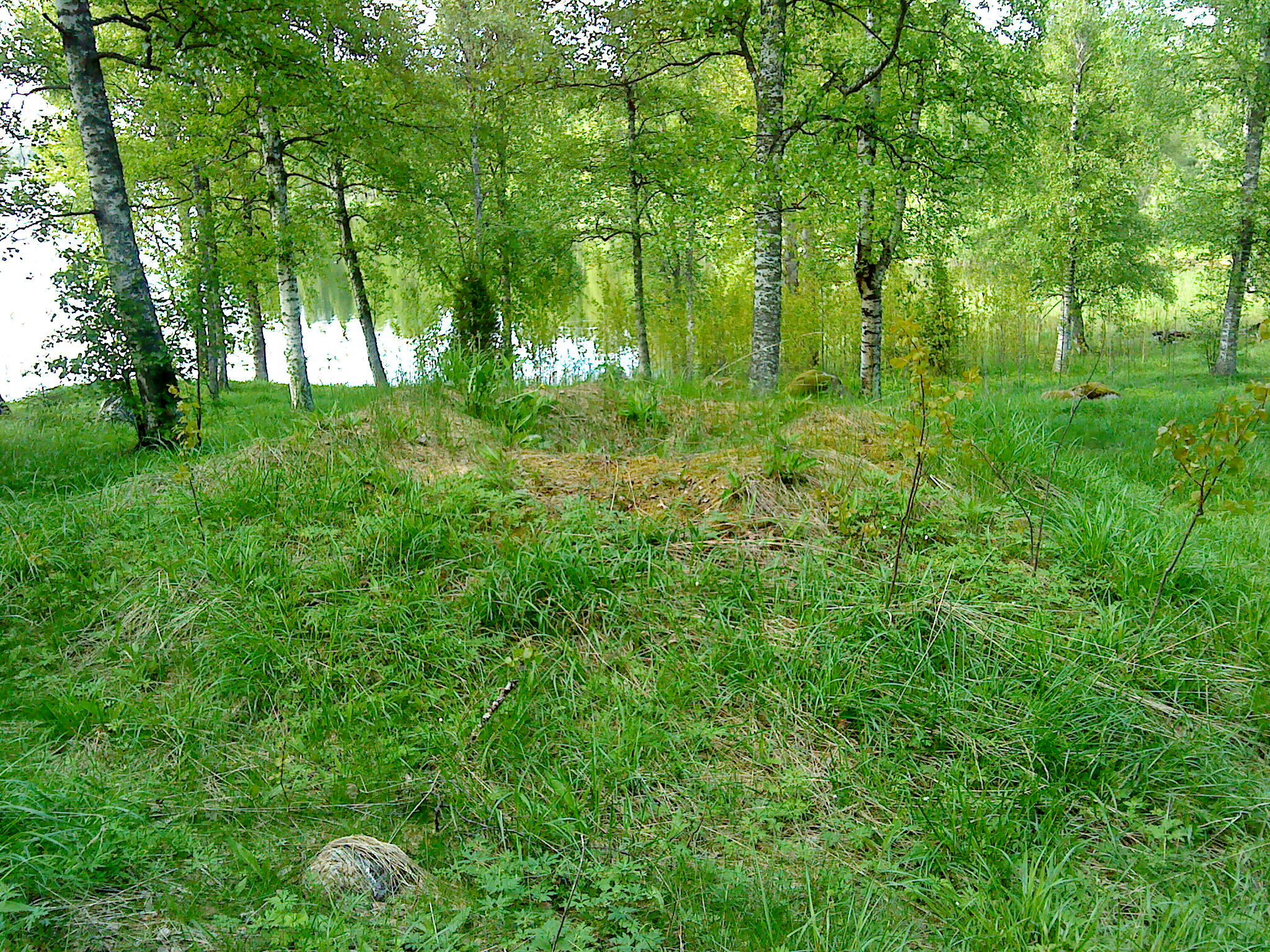 Gravfält täckt med grönt gräs, björkar och vatten i bakgrunden.